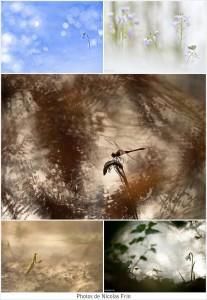 photos-de-nicolas-frin
