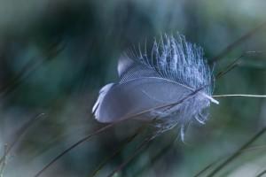 4-photo-de-laure-conry