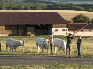 cows-dscn4265