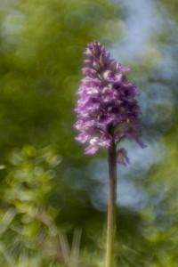 32-orchis-milataris-zeiss-ikon-vario-talon-70-120